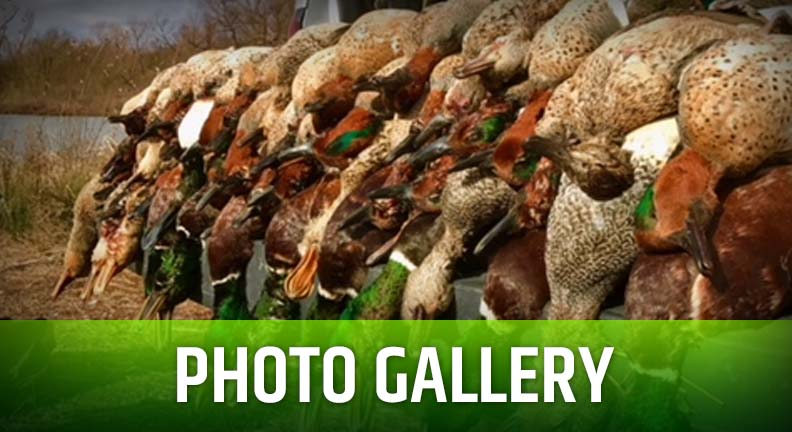 Swamp Nasty Outfitters Photo Galleries
