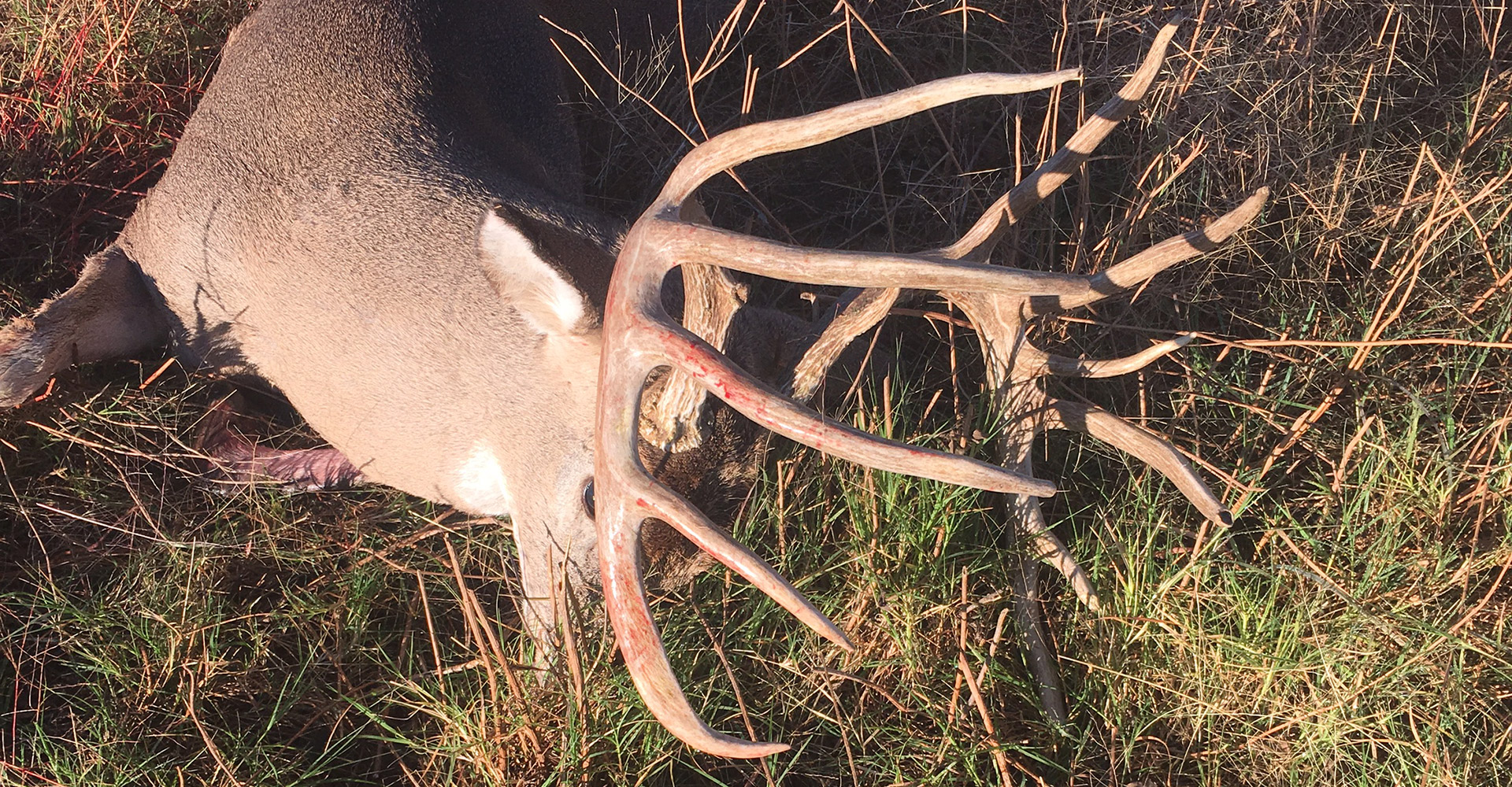 North Texas Whitetail Deer Hunting